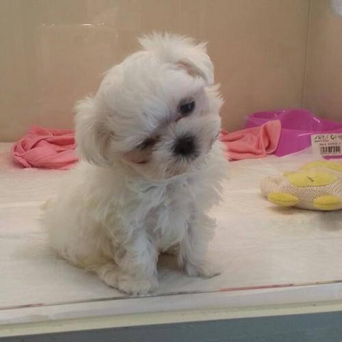 Fany&#39;s dog, Romeo <3~