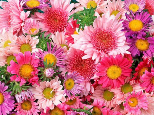 flores for Lily ♥
