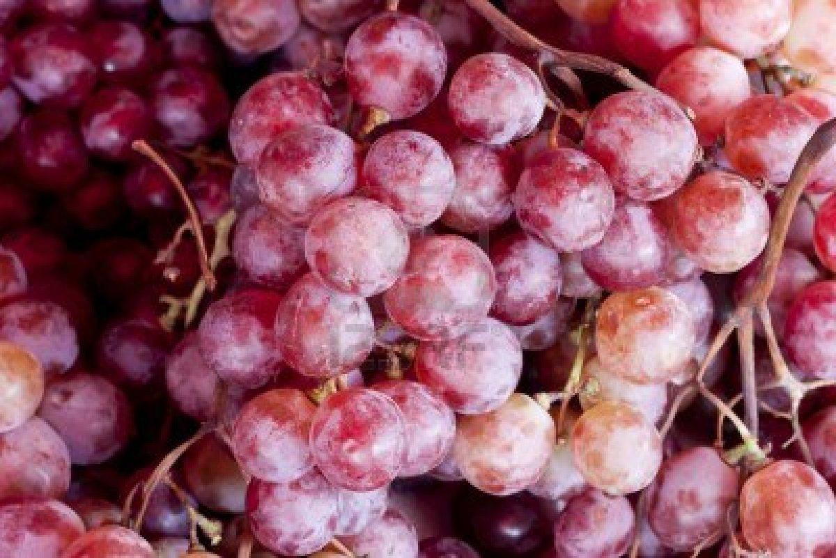 Grapes Fruit Photos