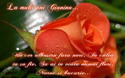 Roses wallpaper entitled La multi ani Gianina