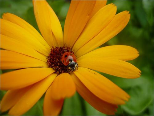 Ladybug muro