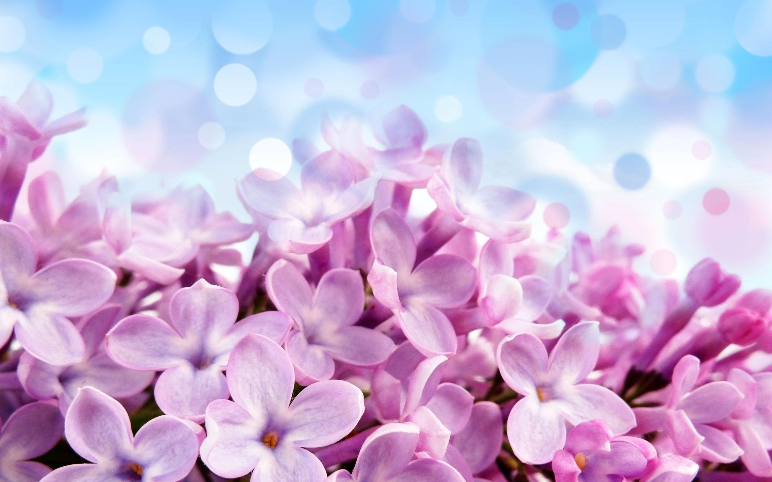 Фото фоны цветы