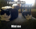 Mini Me  - animal-humor photo