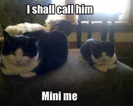 Mini Me