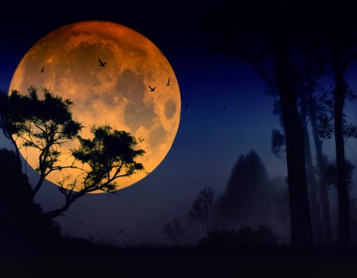 Beautiful Pictures wallpaper called Moon wallpapers
