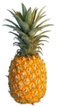 Pineapple - fruit photo
