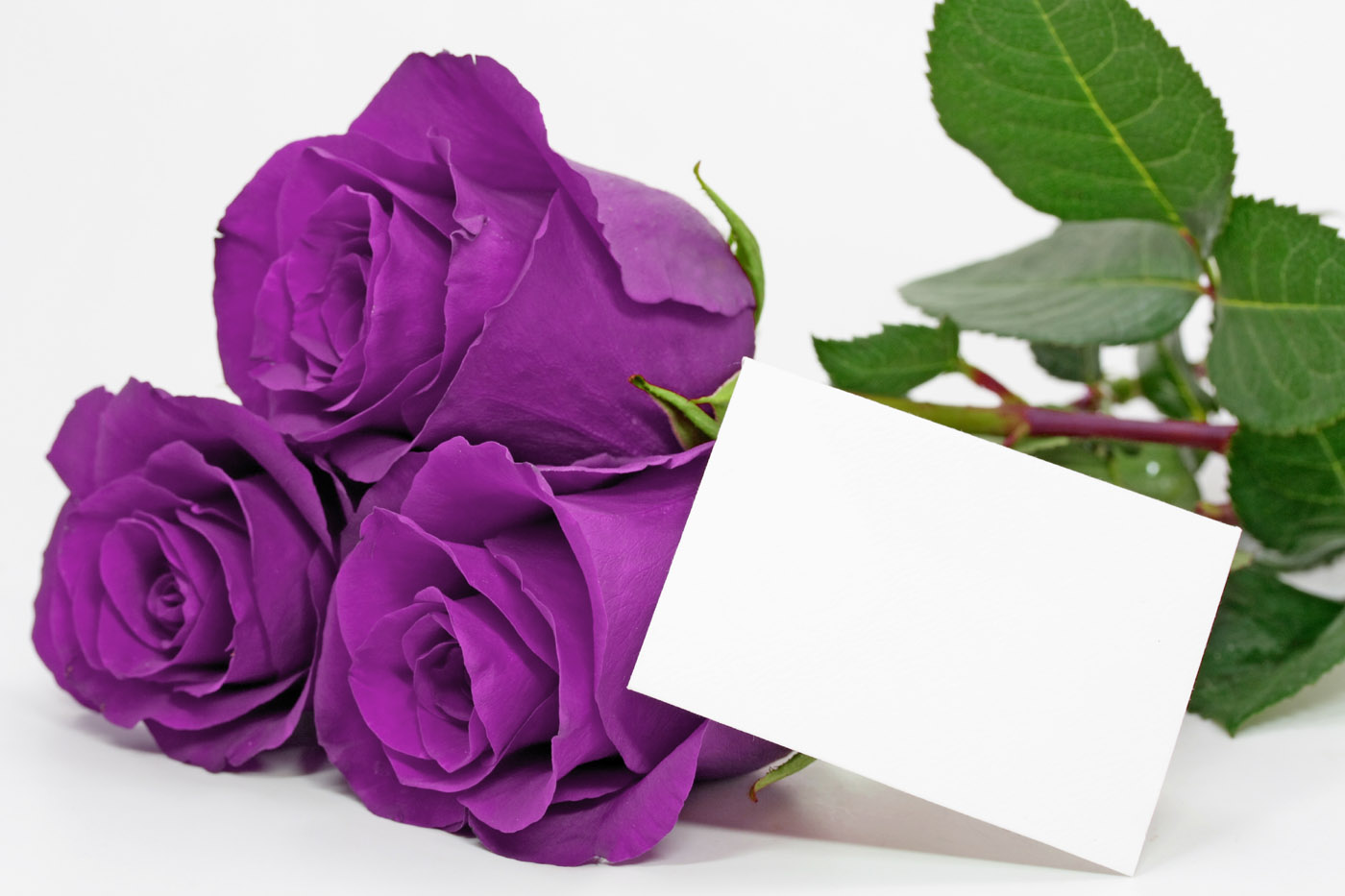 Purple images purple rose hd wallpaper and background photos 34727262 purple images purple rose hd wallpaper and background photos izmirmasajfo