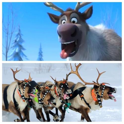 Reindeers DO pant!