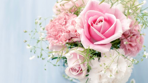 fiori wallpaper containing a bouquet, a camellia, and a begonia entitled rose