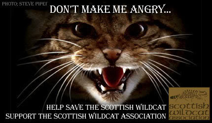 Save the Wildcat