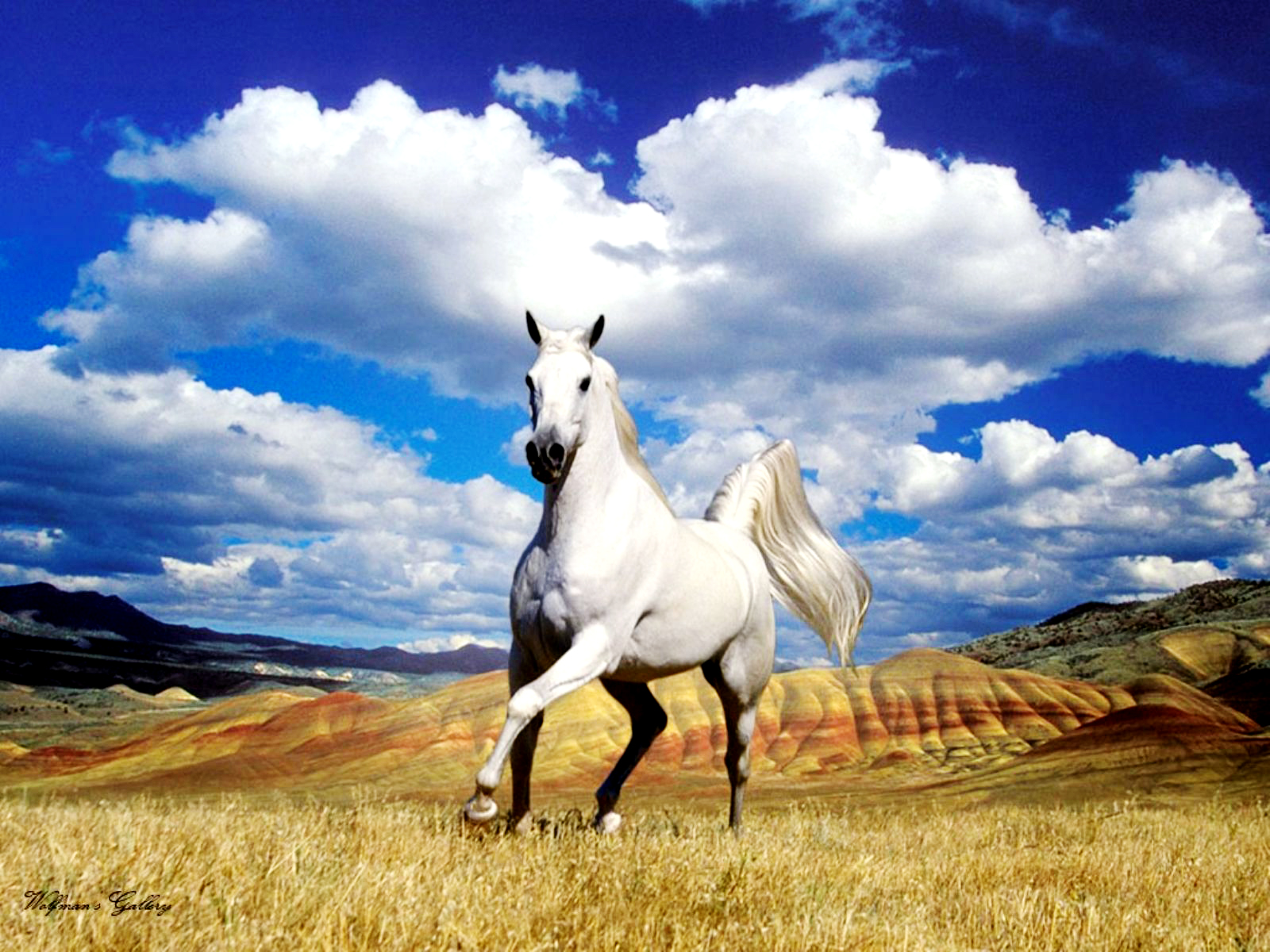 Stunning White Horse Colors Photo 34711711 Fanpop