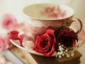 Teacup and Flowers - daydreaming photo
