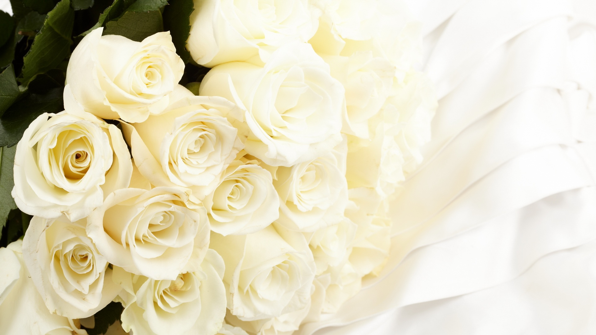 White Images White Rose Hd Wallpaper And Background Photos 34727328