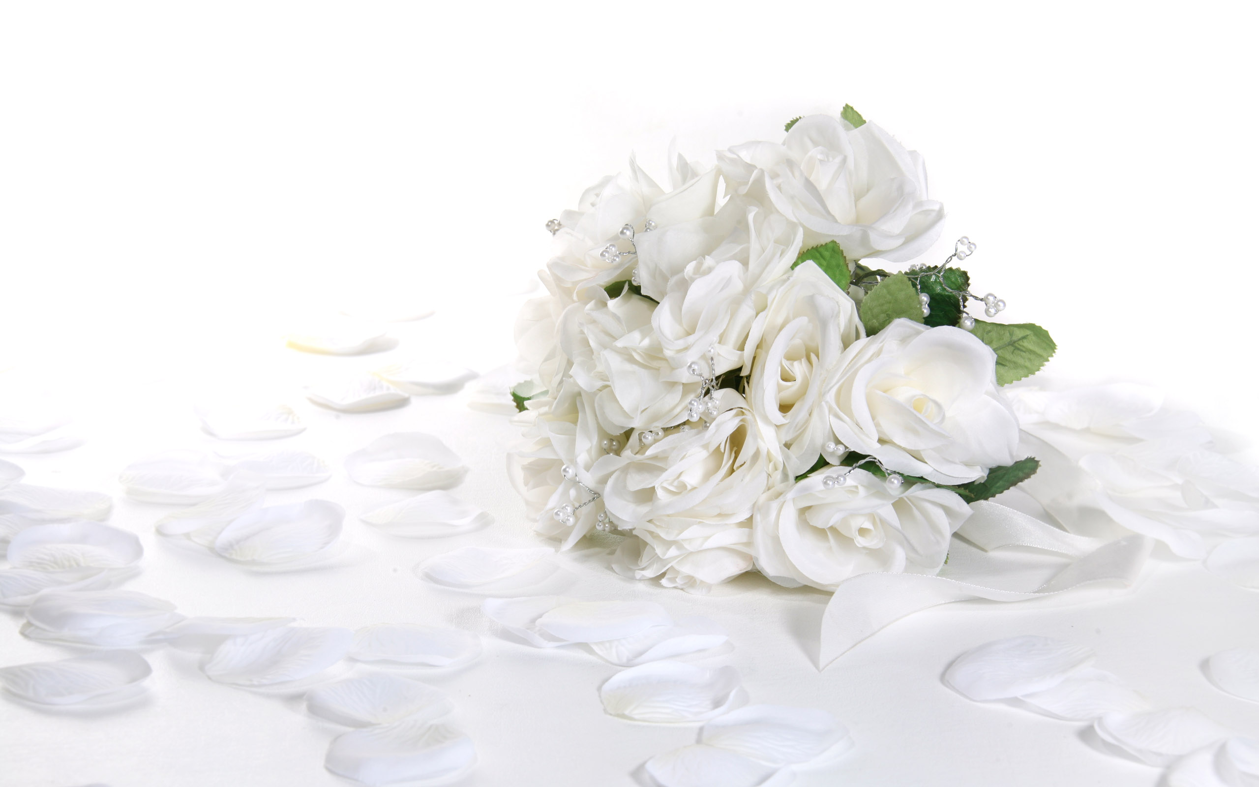 White Images White Rose Hd Wallpaper And Background Photos 34727335