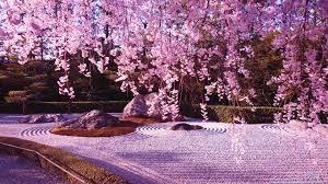 вишня blossoms