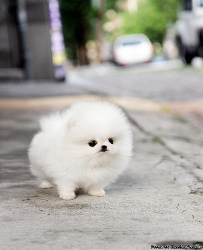 cute fluffy dog - dogs Photo