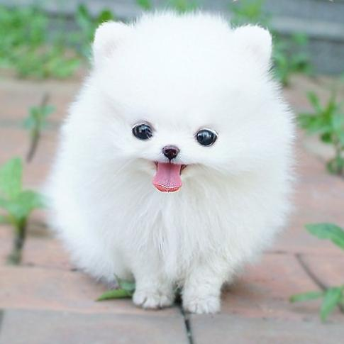cute fluffy dog