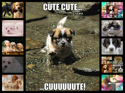 different pics of cute puppies
