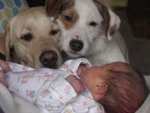 dogs & baby