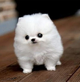 fluffy dog - dogs photo