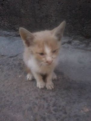 homeless animaux in turkey