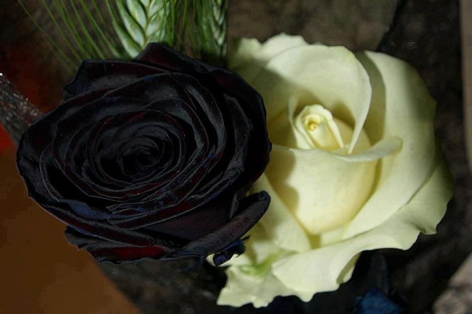black/white rose