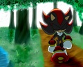 .:Through The Forest:. - shadow-the-hedgehog photo