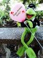 Birthday greetings to Henk!  - kermit-the-frog photo