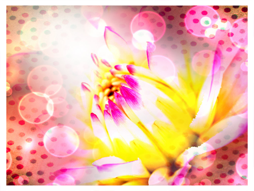 Flowers Images Cotton Candy Lotus Hd Wallpaper And Background Photos