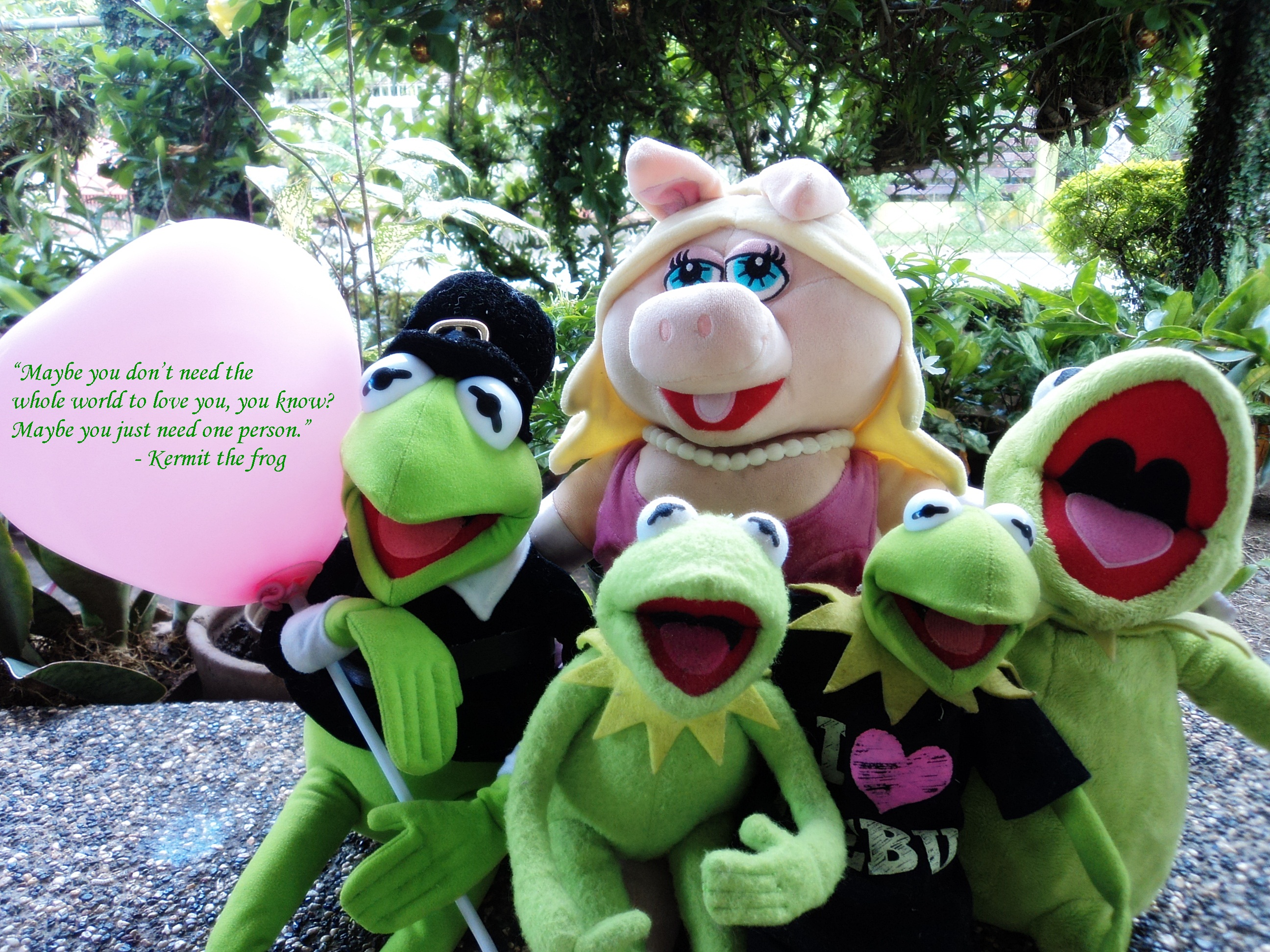 Kermit the Frog and Miss Piggy - Kermit the Frog Photo