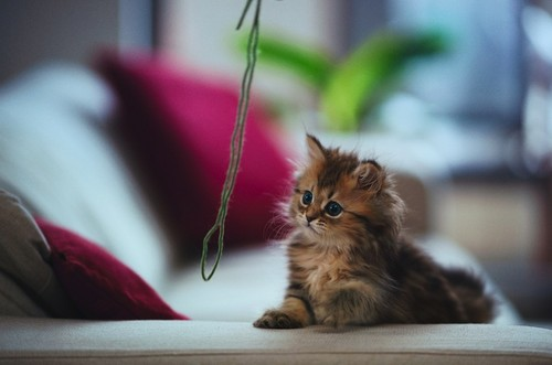 gattini <3