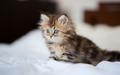 gatinhos <3