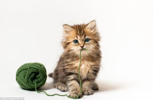 Kittens <3