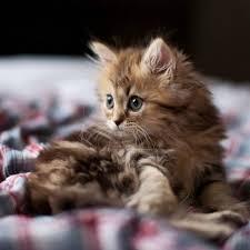gatitos <3
