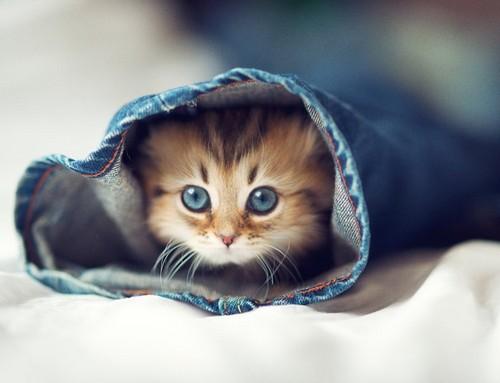बिल्ली के बच्चे <3
