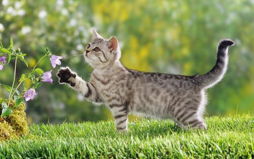 사랑 고양이 ^_*