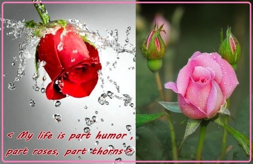 My life is part humor, part roses, part thorns.