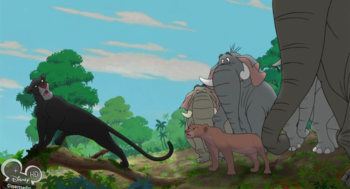 disney crossover achtergrond probably containing a lippizan, a doberman, and a manchester terriër titled Nala/Bagheera