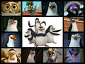 PoM Guys!!! - penguins-of-madagascar fan art