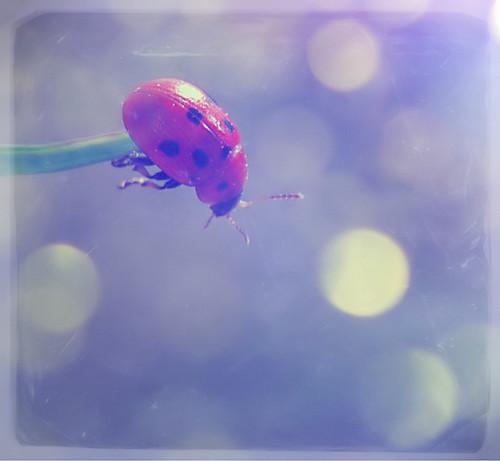 Suicidal_Ladybug