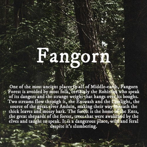 J.R.R. Tolkien wallpaper called Fangorn