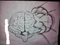 brain - drawing photo
