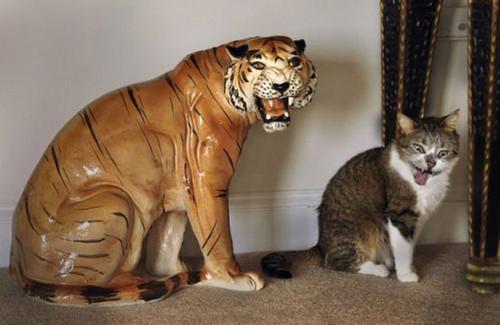 "hey look at me ,I'm a tiger- ""roaawarr"""