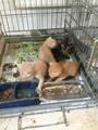 homeless animals in turkey