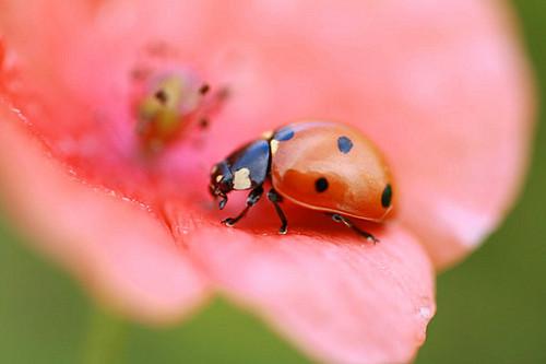 humble_ladybug