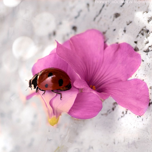 ladybug ছবি
