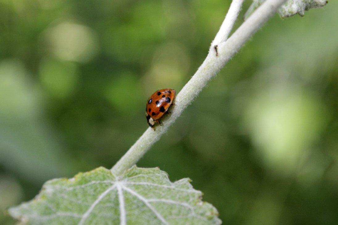 ladybugs - Ladybugs Photo (34832571) - Fanpop