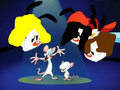 tracy` sofia and dasiy meet pinky and brain - animaniacs fan art