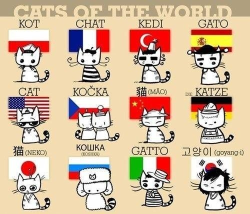 ~Cats Of The World~