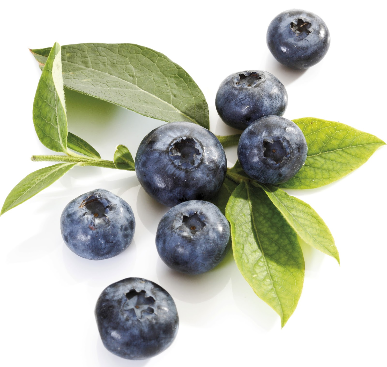 Blueberry - Fruit Photo (34914645) - Fanpop